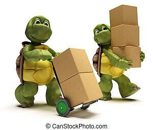 dobozok, teknősbéka, hajózás