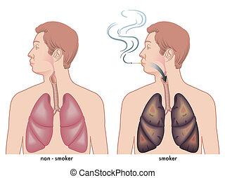 dohányzó