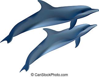 dolphins., két, ábra, háttér., vektor, fehér