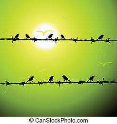 drót, árnykép, madarak