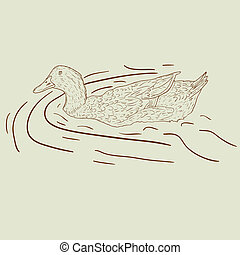 duck., vad