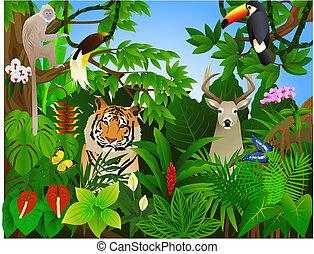 dzsungel, állat