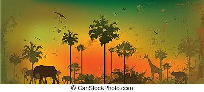 dzsungel, állatok