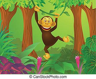 dzsungel, csimpánz