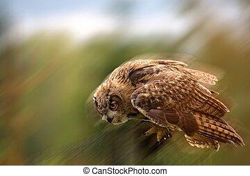 eagle-owl, menekülés
