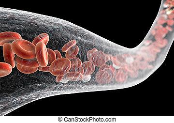 edény, erythrocytes, fehér vérsejtek, vér
