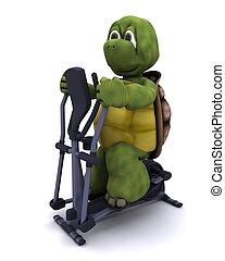edző, runnning, teknősbéka, kereszt
