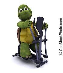 edző, teknősbéka, kereszt