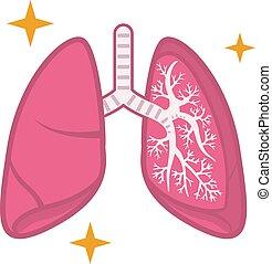egészséges, ábra, tüdő