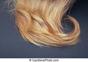 egészséges, haj, black háttér, szőke