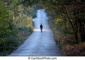 egyedül, gyalogló, erdő, út, ember