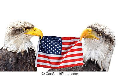 egyesült, flag., fog, egyesült államok, csőr, sasok, kopasz