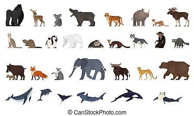 egzotikus, állatok, set., gyűjtés, állat, vad