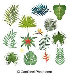 egzotikus, állhatatos, zöld, elszigetelt, ábra, tropikus, vektor, fehér