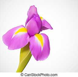 egzotikus, vektor, finom, virág