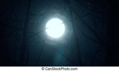 elágazik, holdfény, erdő, hold, fa, éjszaka, lámpa, kék
