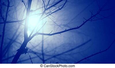 elágazik, köd, fény, lámpa, hold, sötét