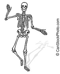 elülső, csontváz, emberi