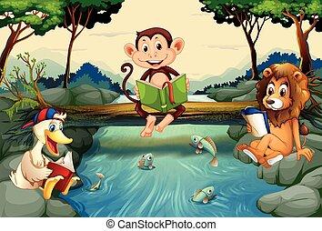 előjegyez, vad, folyó, állatok, felolvasás
