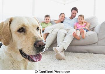 előtér, eleven, otthon, kedvenc, dívány, -eik, szoba, ülés, labrador, család, boldog