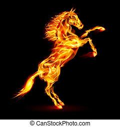 elbocsát, nevelés, ló, feláll.