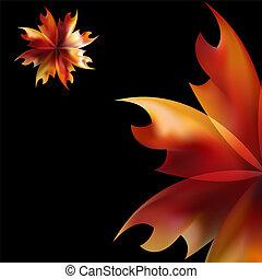 elbocsát, rózsa, lángoló, virág szirom