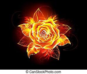 elbocsát, rózsa, virágzó