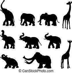 elefántok, zsiráf, mommoth