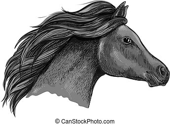 elegáns, ló, fekete, portré