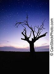 elhagyott, árnykép, csillagos, felett, fa, ég