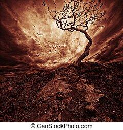 elhagyott, öreg, ég, felett, fa, drámai
