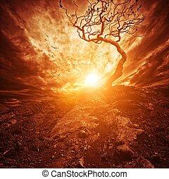 elhagyott, öreg, felett, fa, drámai, napnyugta