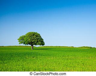 elhagyott, búza, fa, mező
