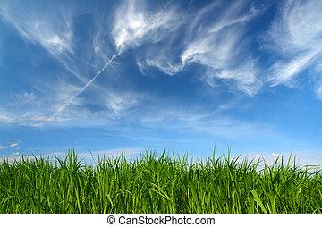 elhomályosul, ég, zöld, alatt, fű, gyapjas