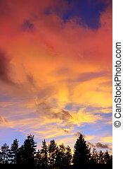 elhomályosul, felül, tó, bitófák, napnyugta, tahoe, kalifornia, piros