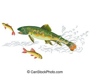 elkap, pisztráng, ragadozó, fish, patak