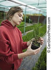 ellenőrzés, melegház, kutatás, zöld, virágárus, botanika, ellenőriz, detektívek, palánta, nő, gyönyörű, outdoors.