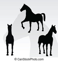 ellen, ló, whi, portré, álló