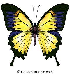 elszigetelt, sárga, ábra, háttér, fehér, butterfly.