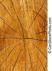 elvág, fa, struktúra, törzs