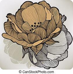 elvont, vektor, illustration., flower., virágzás