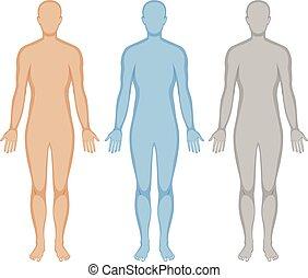 emberi, három, test, befest, áttekintés