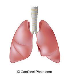 emberi tüdő, eps8
