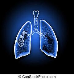 emberi, tüdő