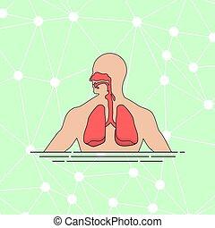 emberi, vektor, légzési, ábra, anatómia, időtartam