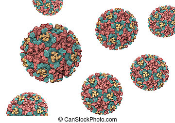 encephalitis, lovas, keleti, vírus