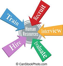 erőforrás, emberek, munkavállaló, emberi, alkalmazás