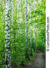 erdő út, megvesszőz, eredet