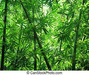 erdő, bambusz, ázsiai, kilátás