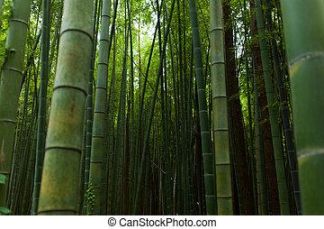 erdő, bambusz